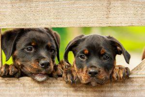 Hondenuitlaatdienst